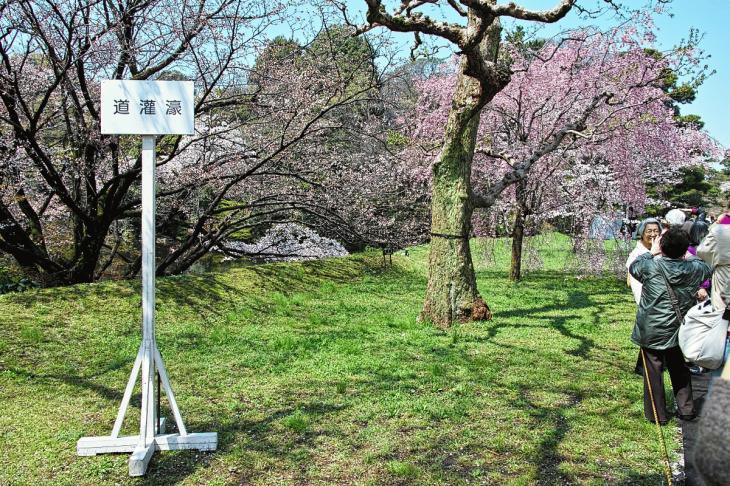 inuidori_spring-34.jpg