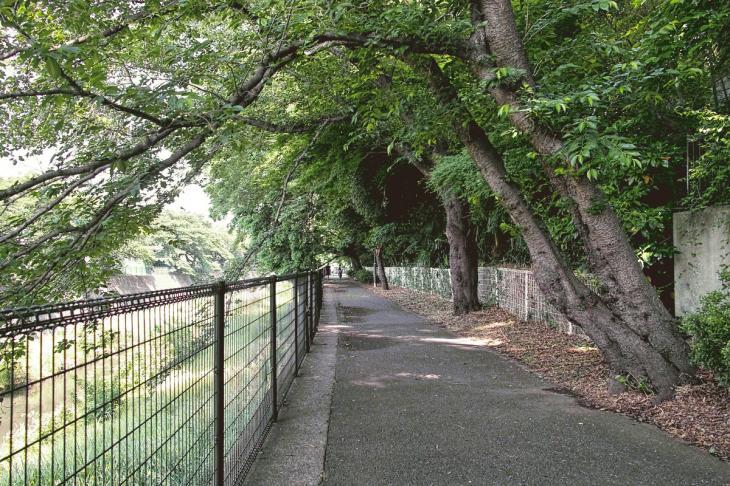 negawa-5.jpg