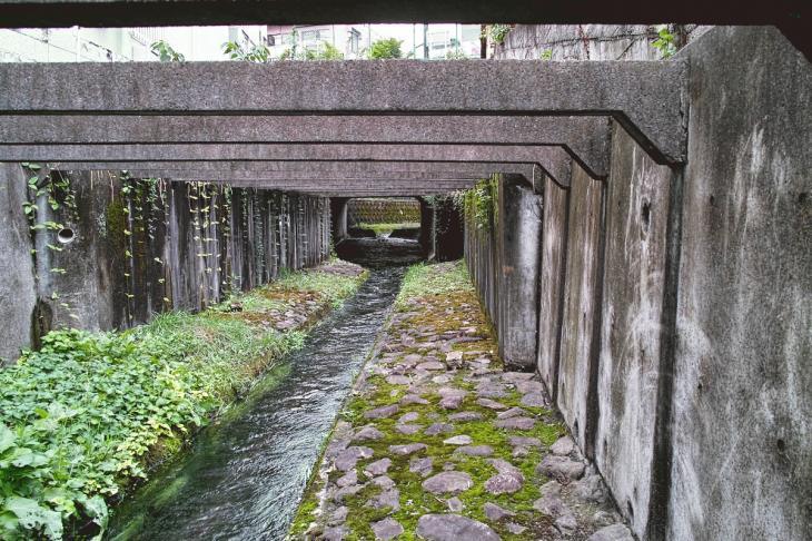 nogawa_kokubunji-16.jpg