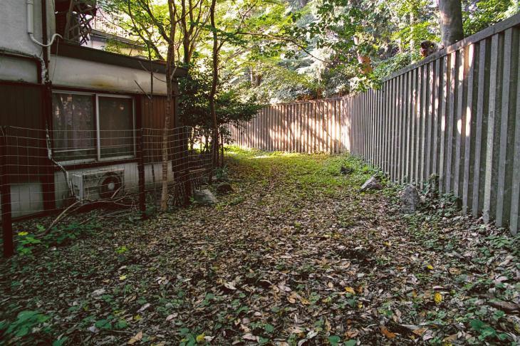 shibuyagawa_genryu-16.jpg