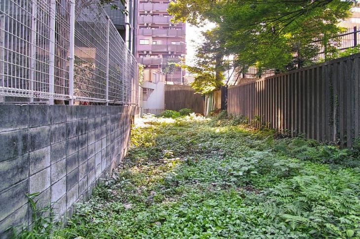 shibuyagawa_genryu-20.jpg