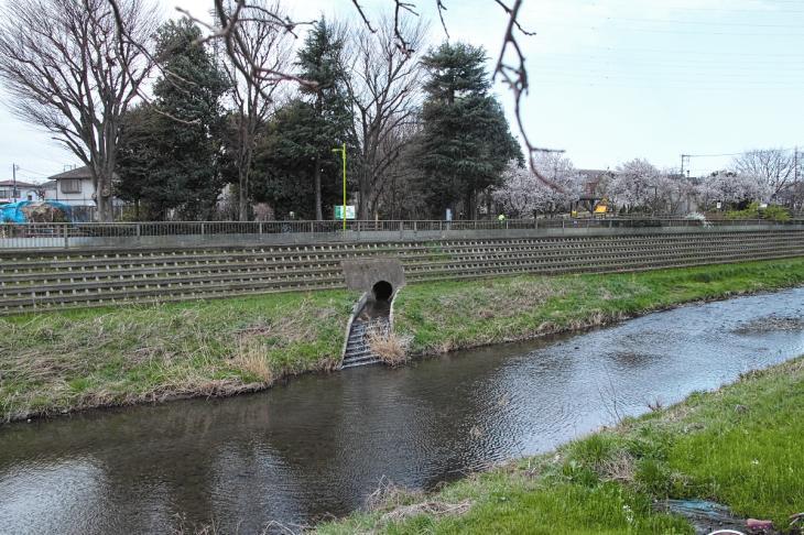 160320marukogawa-1.jpg
