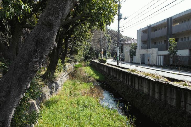 160320marukogawa-50.jpg