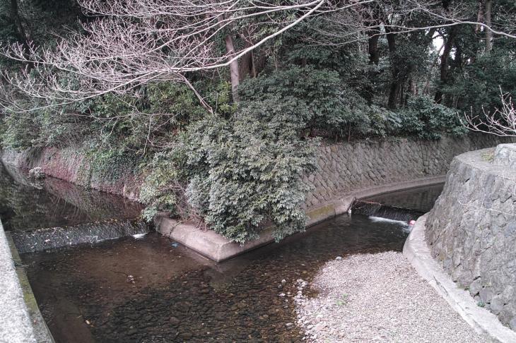 160320marukogawa-54.jpg