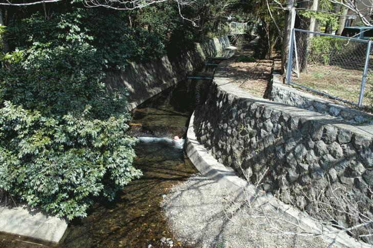 160320marukogawa-55.jpg
