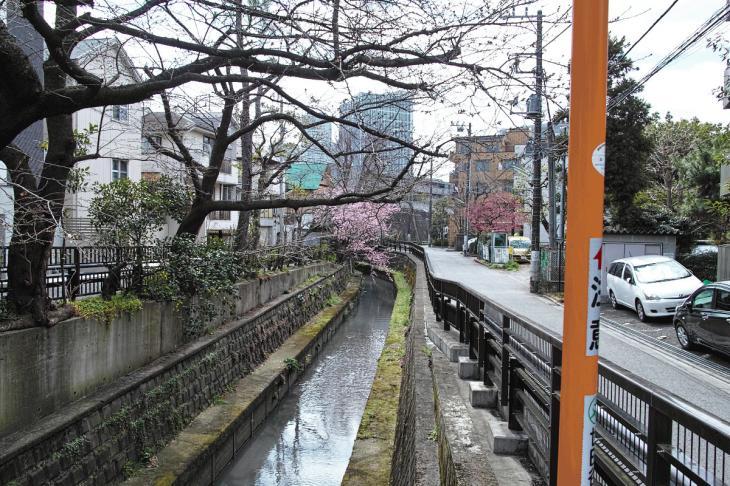 160320marukogawa-63.jpg