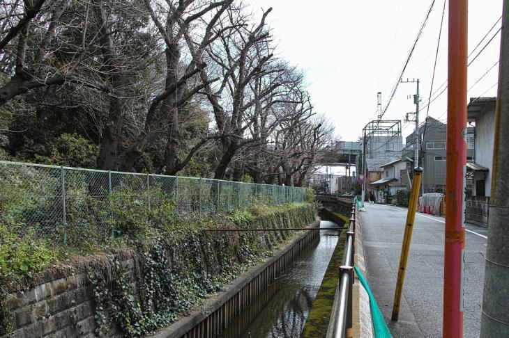 160320marukogawa-72.jpg