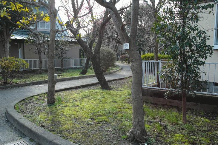 nogawaryokudoui-118.jpg