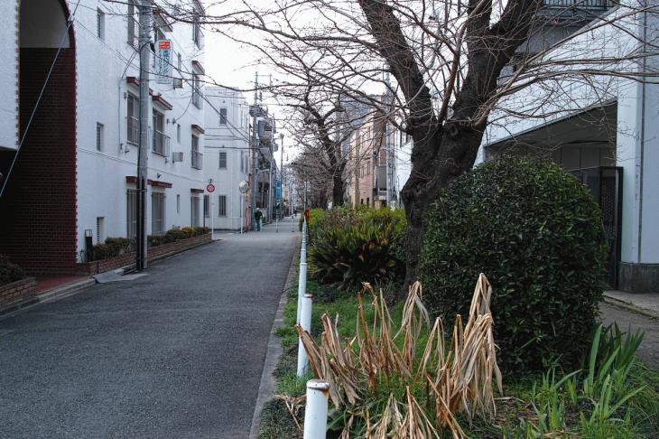 nogawaryokudoui-122.jpg