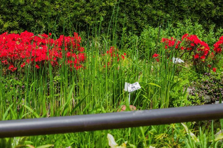megurogawa_flower-12.jpg