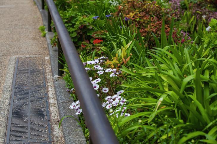 megurogawa_flower-13.jpg
