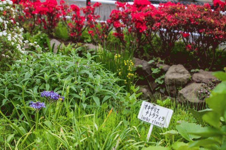 megurogawa_flower-15.jpg