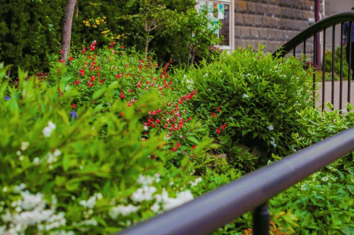 megurogawa_flower-19.jpg