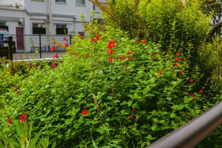megurogawa_flower-21.jpg