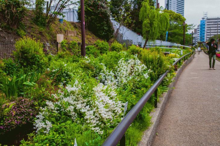 megurogawa_flower-26.jpg