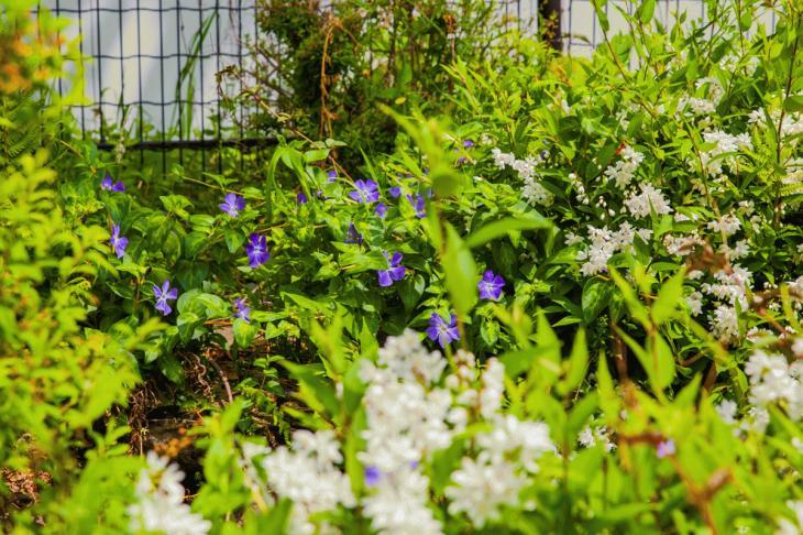 megurogawa_flower-33.jpg