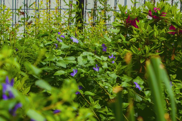 megurogawa_flower-34.jpg