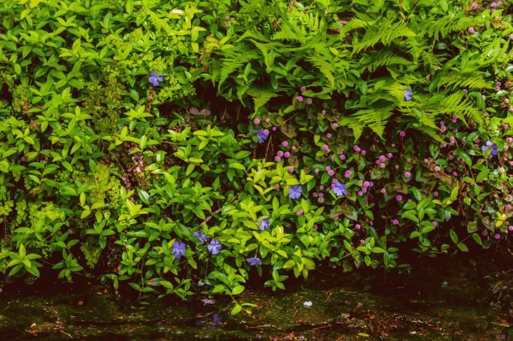 megurogawa_flower-41.jpg