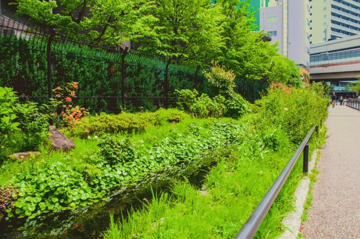megurogawa_flower-42.jpg