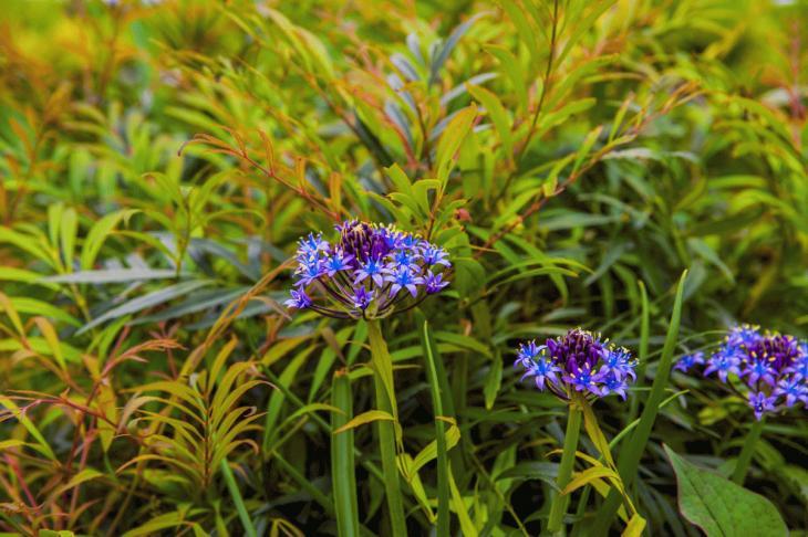 megurogawa_flower-6.jpg