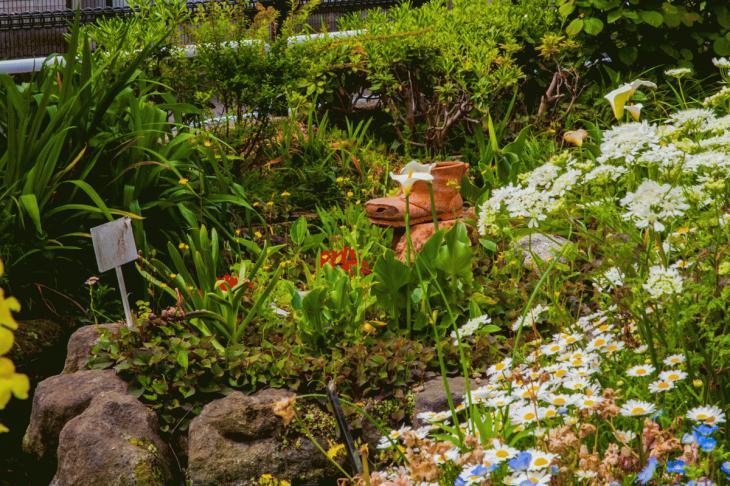 megurogawa_flower-7.jpg