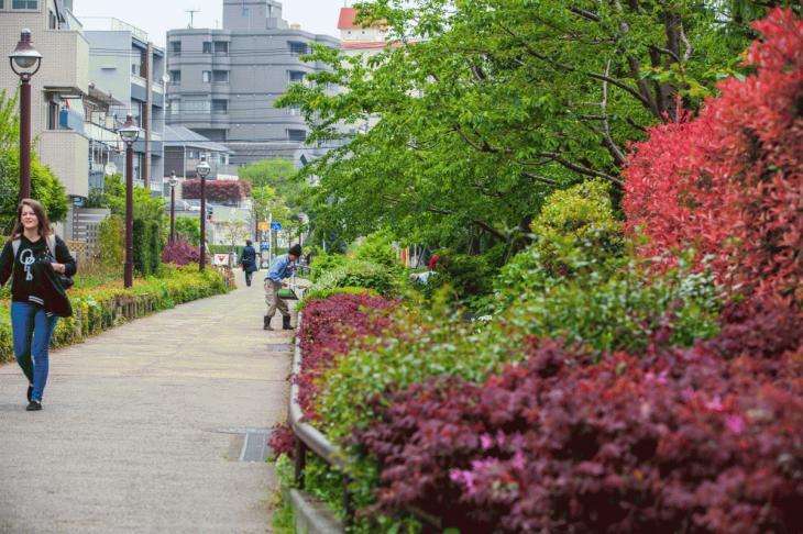 megurogawa_flower-8.jpg