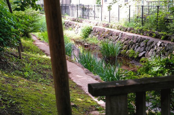 160626(仙川-56).jpg