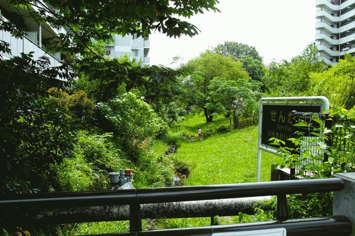 160626(仙川-58).jpg