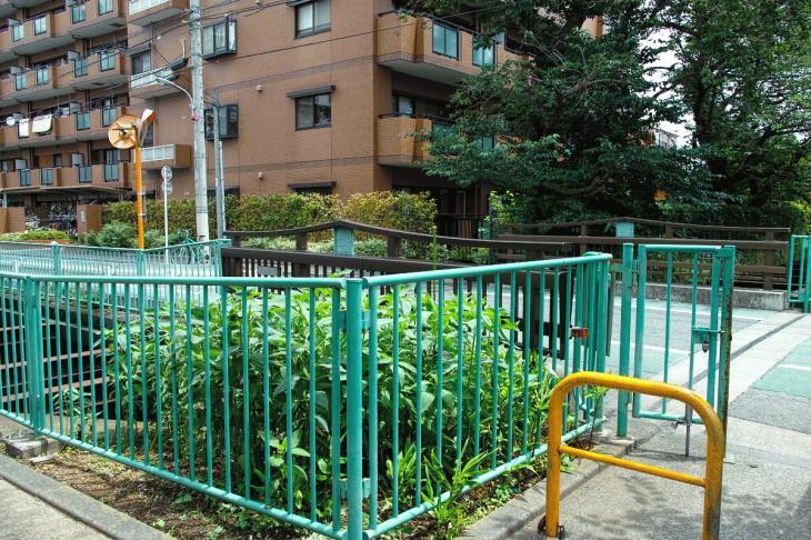 160626(仙川-94).jpg