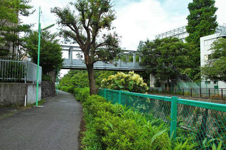 160703(仙川-27).jpg