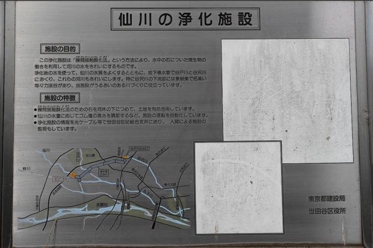 160703(仙川-50).jpg