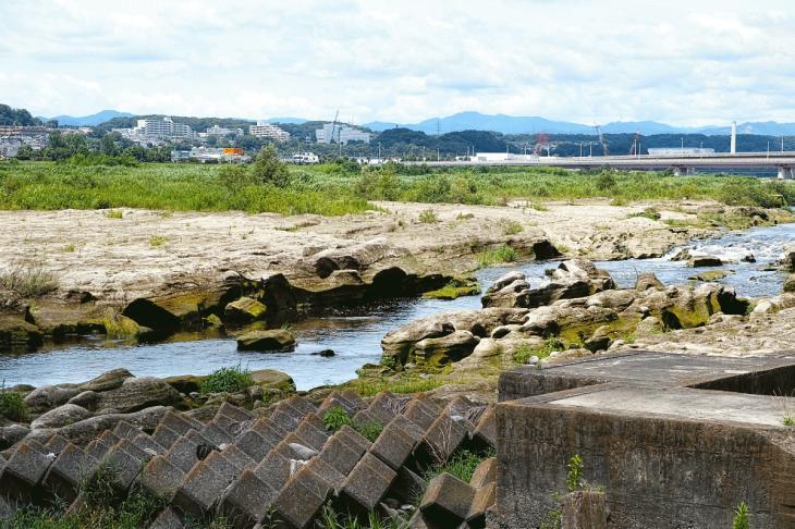 160710(多摩川-18).jpg