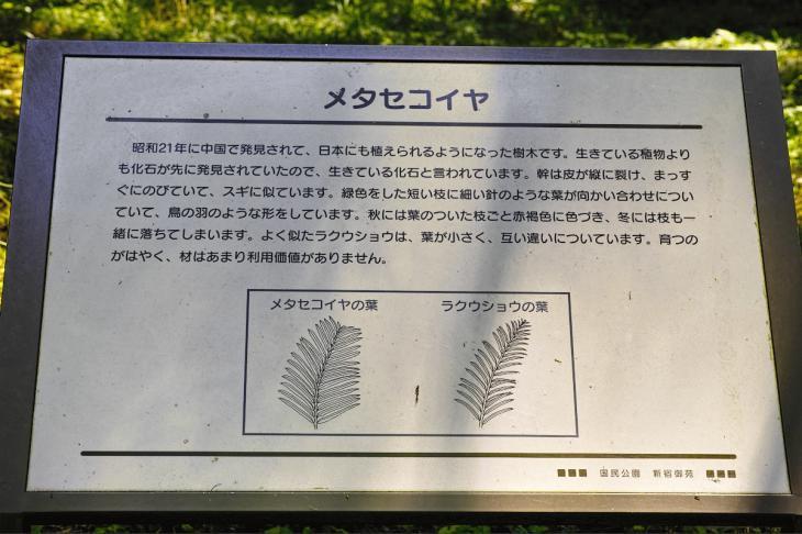 160730shinjyukugyoen-10.jpg