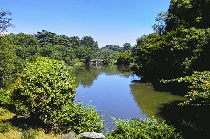 160730shinjyukugyoen-104.jpg