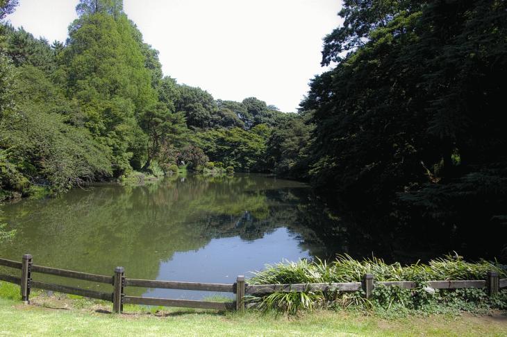 160730shinjyukugyoen-109.jpg