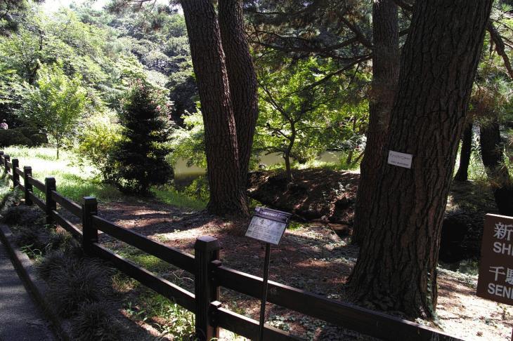 160730shinjyukugyoen-110.jpg