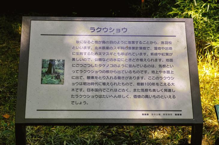 160730shinjyukugyoen-13.jpg