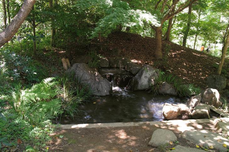 160730shinjyukugyoen-17.jpg