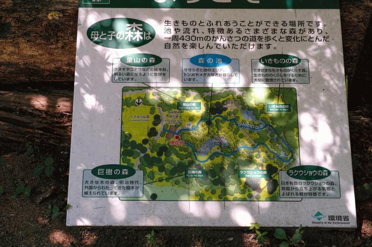160730shinjyukugyoen-18.jpg