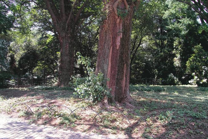 160730shinjyukugyoen-2.jpg