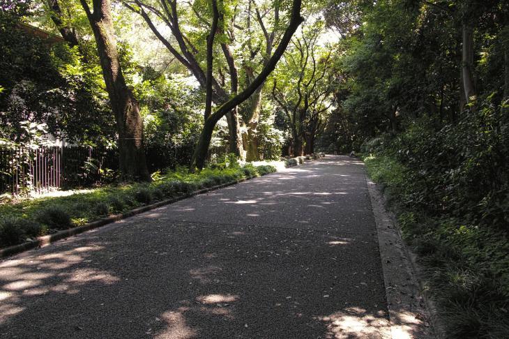 160730shinjyukugyoen-30.jpg