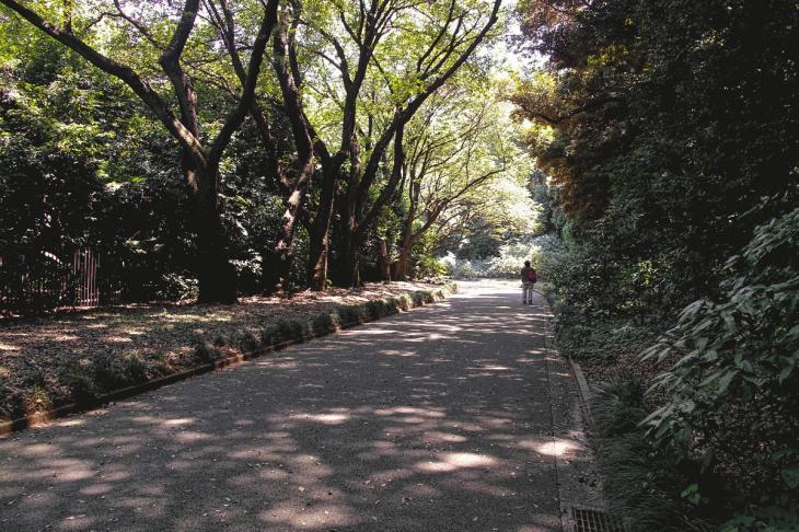 160730shinjyukugyoen-31.jpg