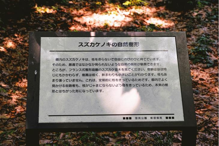 160730shinjyukugyoen-48.jpg