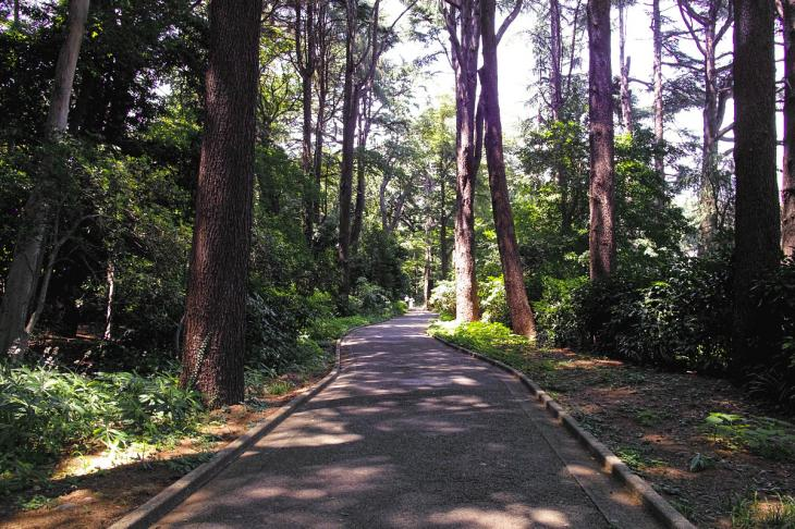 160730shinjyukugyoen-62.jpg