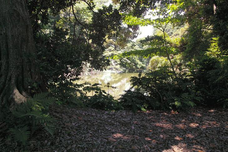 160730shinjyukugyoen-67.jpg