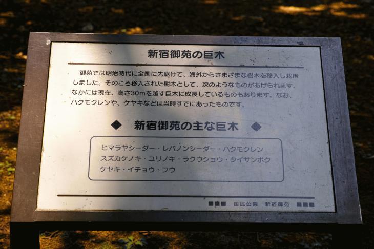 160730shinjyukugyoen-8.jpg
