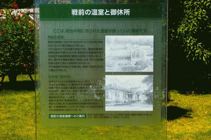 160730shinjyukugyoen-83.jpg