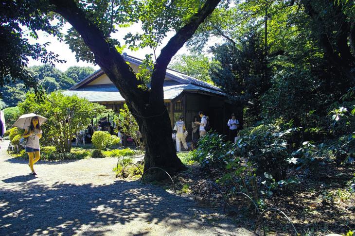 160730shinjyukugyoen-91.jpg