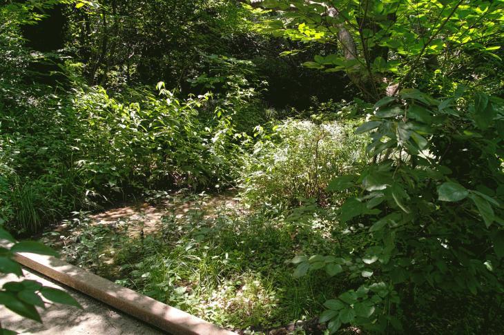 160730shinjyukugyoen-16.jpg