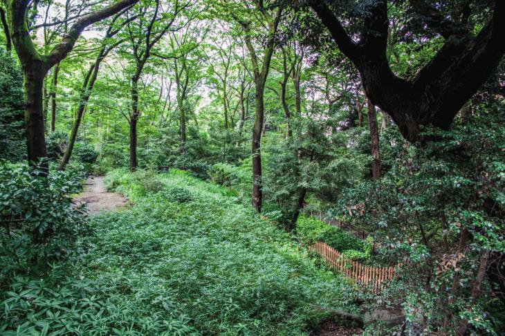 160821有栖川公園-29.jpg